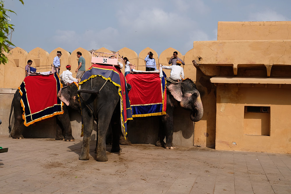 Elephant Delivery System