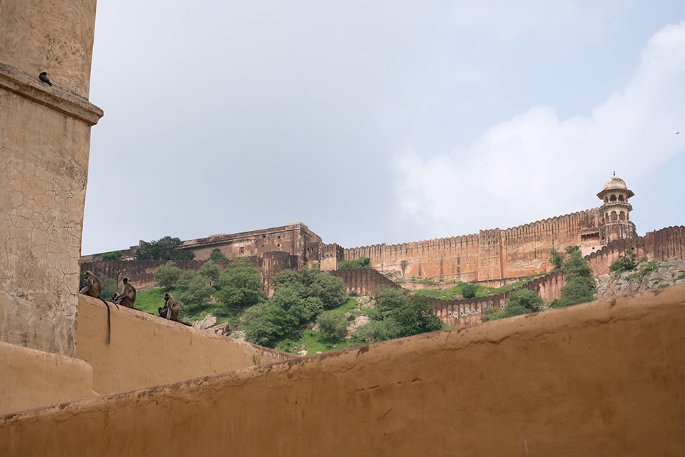 Monkeys and Jaigarh Fort