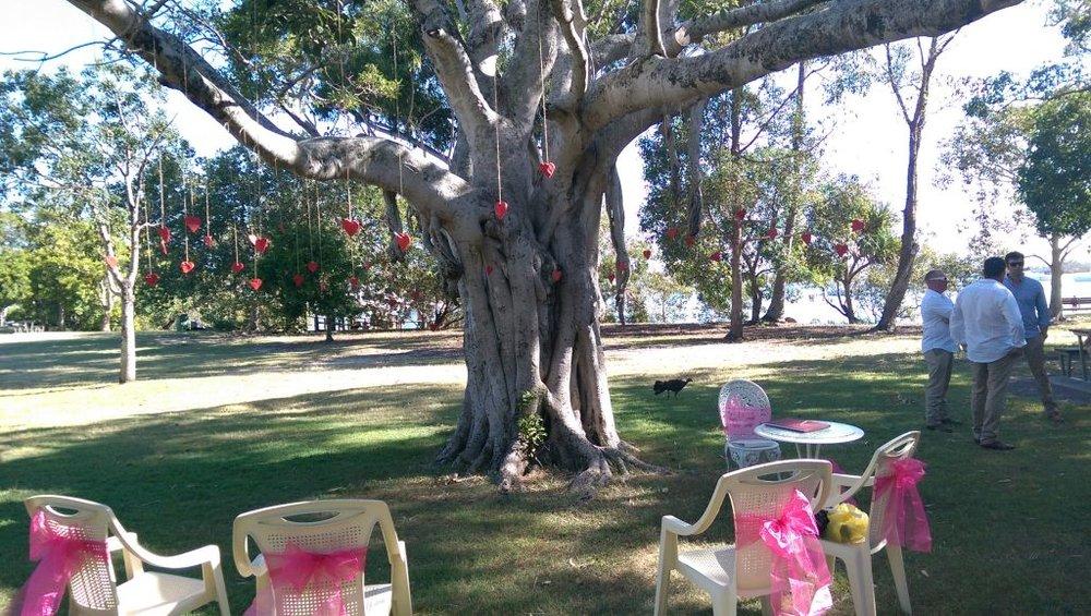 Noosa Woods Park 'The Tree'