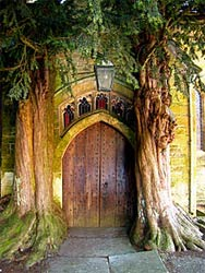 St. Edward's Church, Stow-on-the-Wold, Cotswolds, England. Whether churchgoers realize it or not, the trees in their churchyards have religious roots.