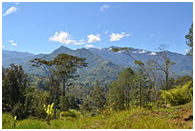 The highlands of Papua New Guinea – Photo: Wikipdia