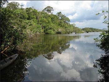 An image of the Ecuadoran Amazon – Photo: Wikimedia Commons