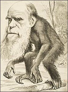 Ever since Charles Darwin wrote The Origin of the Species (1859), he has been caricatured by those who are threatened by his observations and insights. Photo: Wikipedia