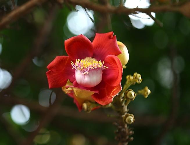 How each person blossoms spiritually should be respected – Photo: Thutruongvn, Pixabay