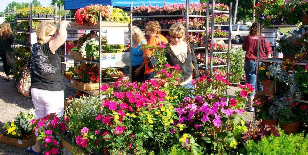Flower Sale, 6-25-11 015.jpg