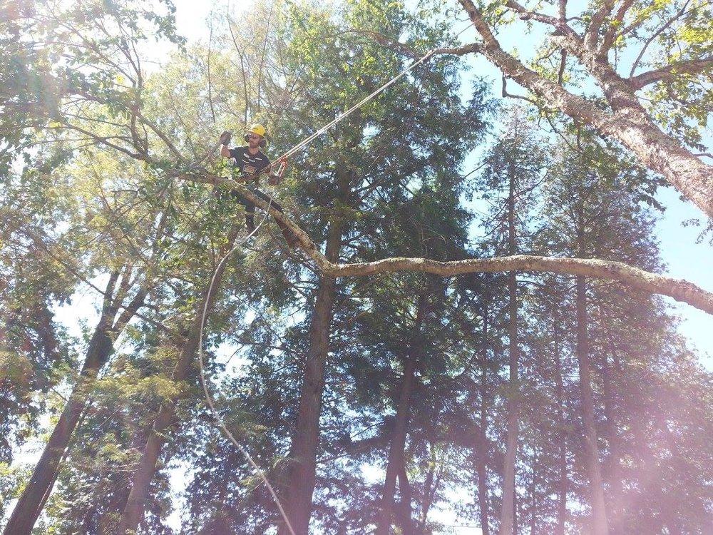 Tree Service Minden