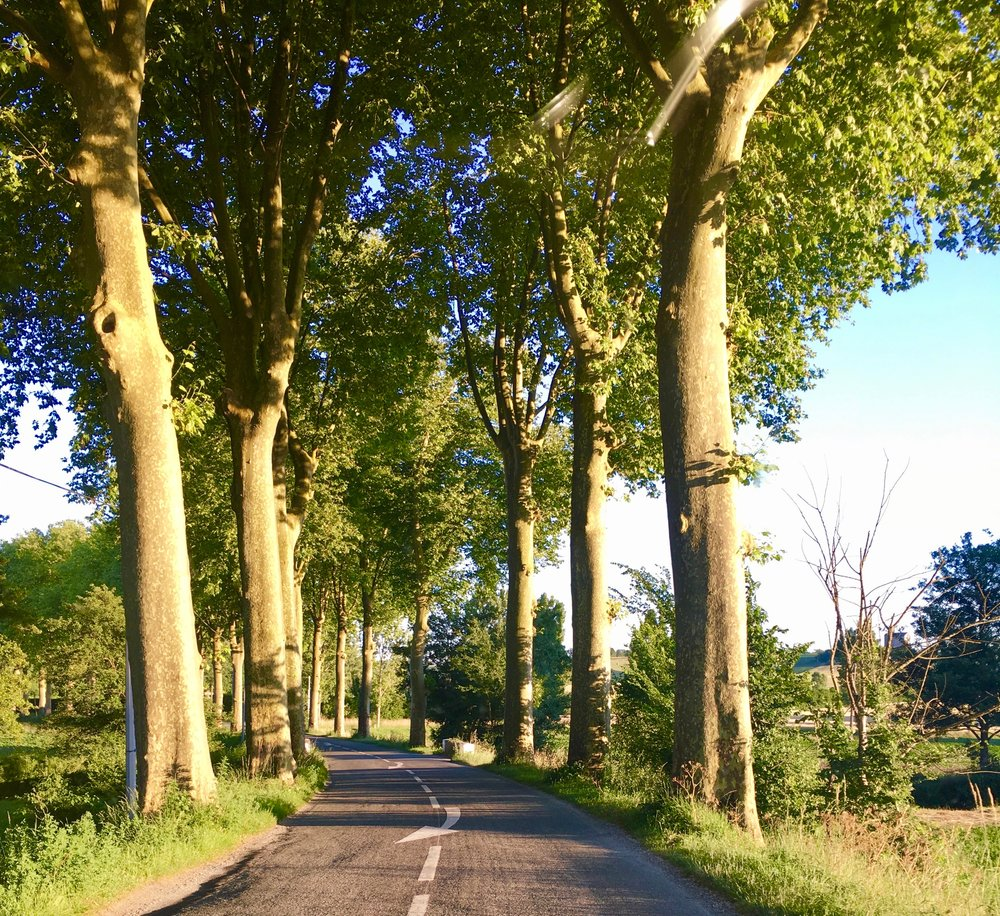 Tree-lined, narrow roads in the French countryside.