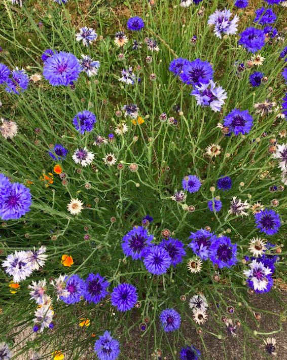 Allergy Season — Alder Family Medicine