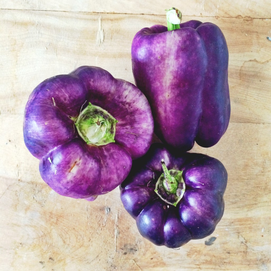 CSA: Purple Peppers