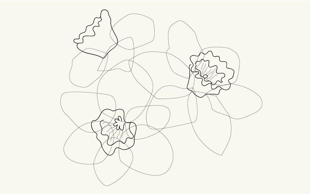 CWILP__daffodils-01.jpeg