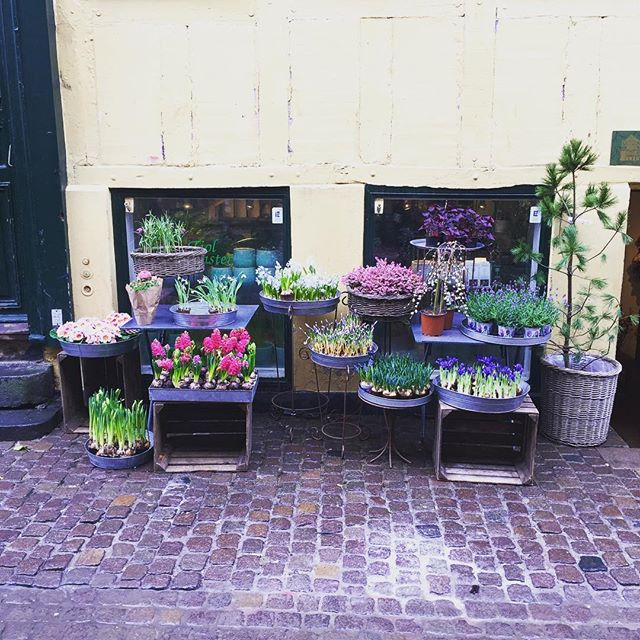 Finding random streets with the cutest little coffee shops 💐🌷Copenhagen, you're my new favourite ❤️ . . . . #travel #travelblogger #travelholic #travel_drops #travel_captures #travelbug #travelgirl #copenhagen #copenhagenlife #visitcopenhagen #visitdenmark #denmark #denmark🇩🇰 #scandanavia #flowers #flower_daily #flower_igers #flowerstagram #flowerlovers #flowerporn #wonderful_places #cobblestone #tlpicks #lonelyplanettraveller #lonelyplanet #living_europe #living_destinations #passionpassport #beautifuldestinations #hygge