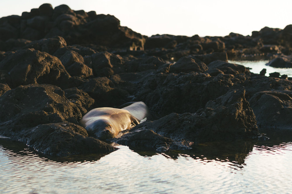 Monk seal spotted napping