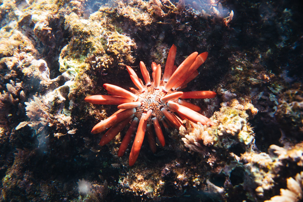 Underwater sea mutant