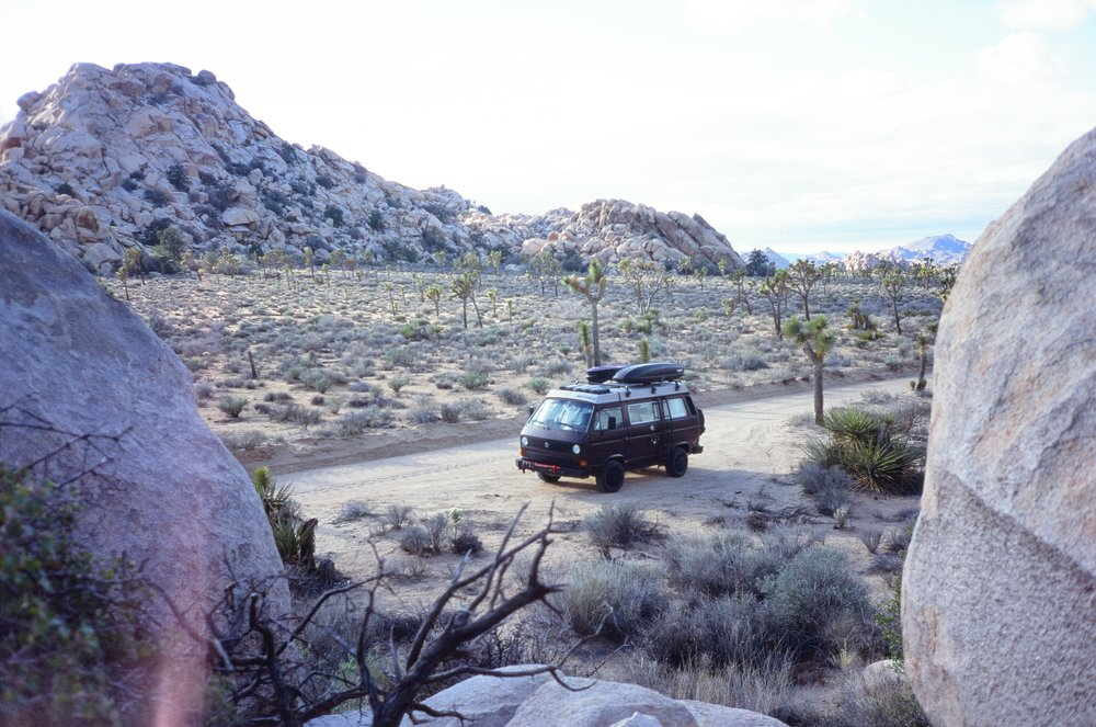 Stanley in Joshua Tree NP, California
