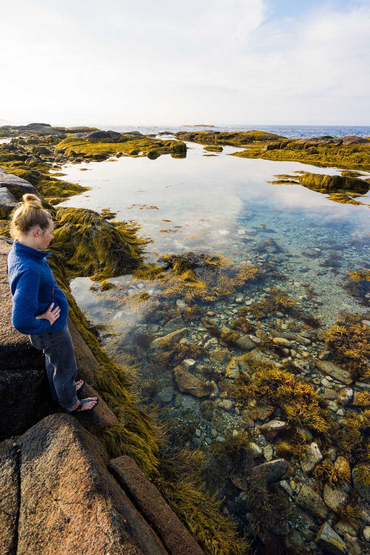 The amazingly clear tide pools of NS's Atlantic coast
