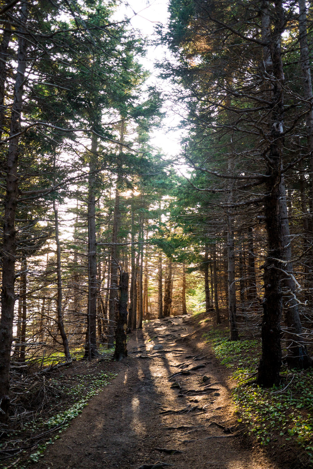 Trail out to Steering Island, Cape Breton NP