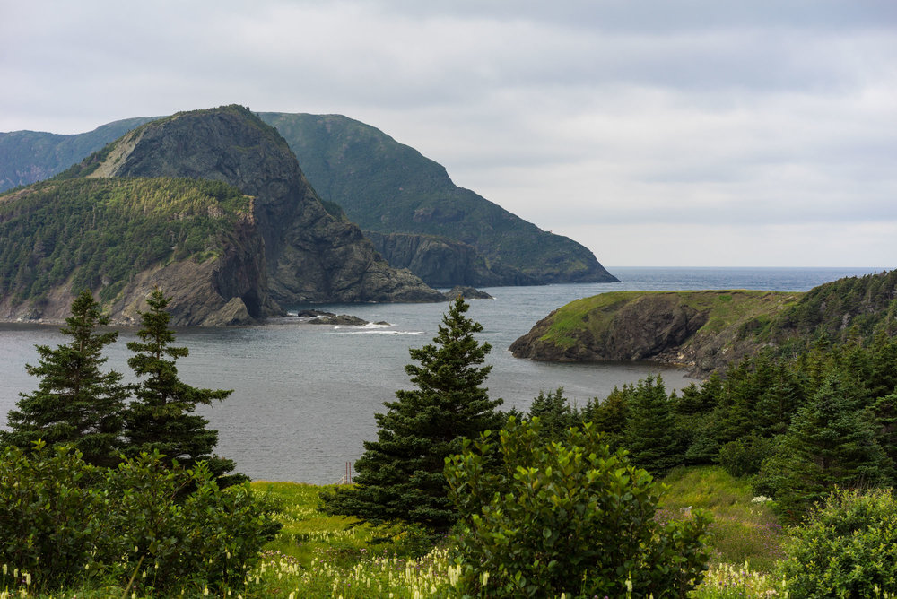 View of Bottle Cove