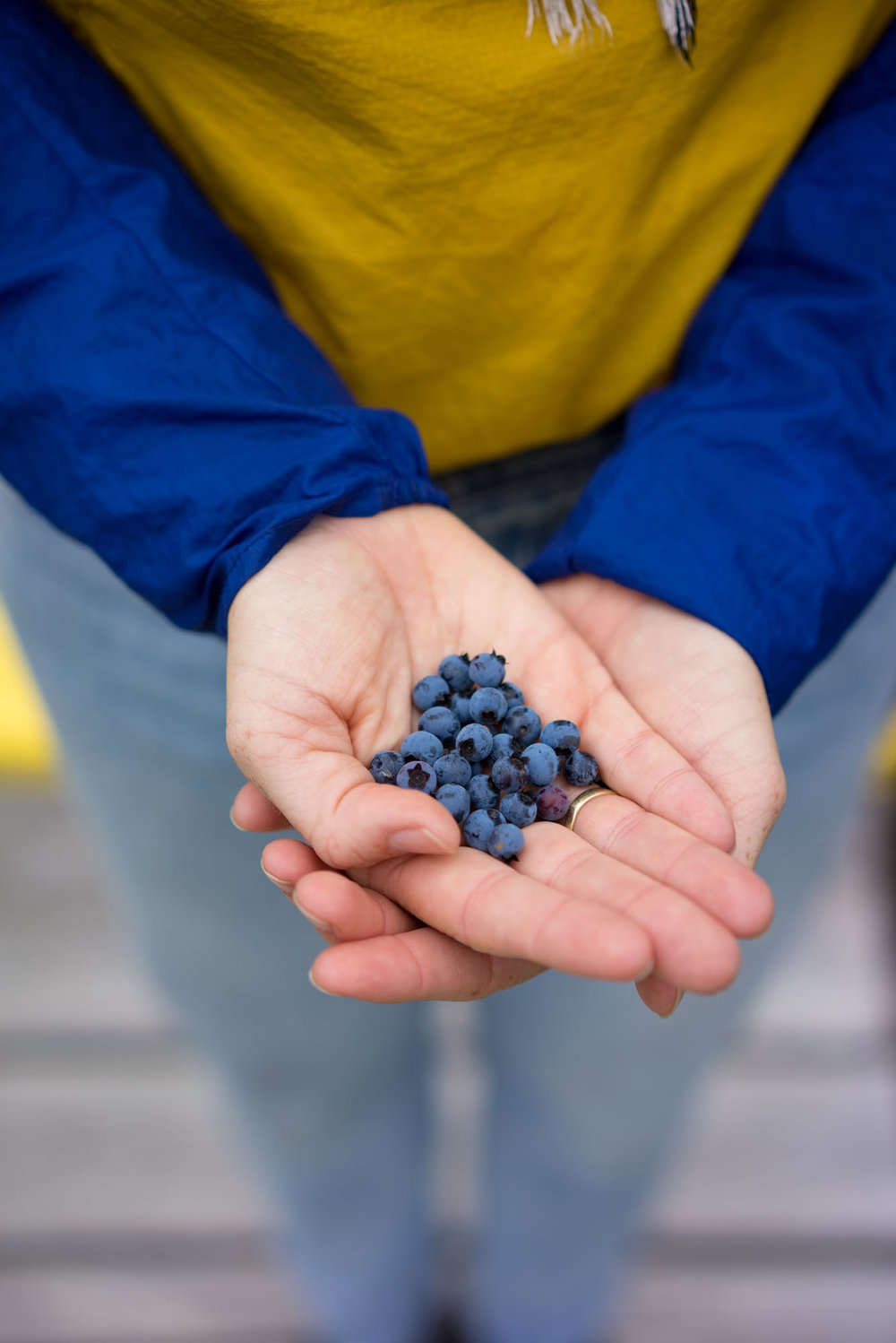 The blueberry haul
