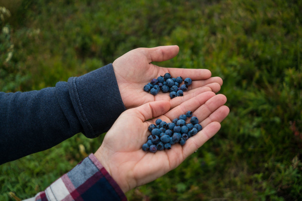 We gorged ourselves with ripe blueberries the whole way on the Skerwink Trail