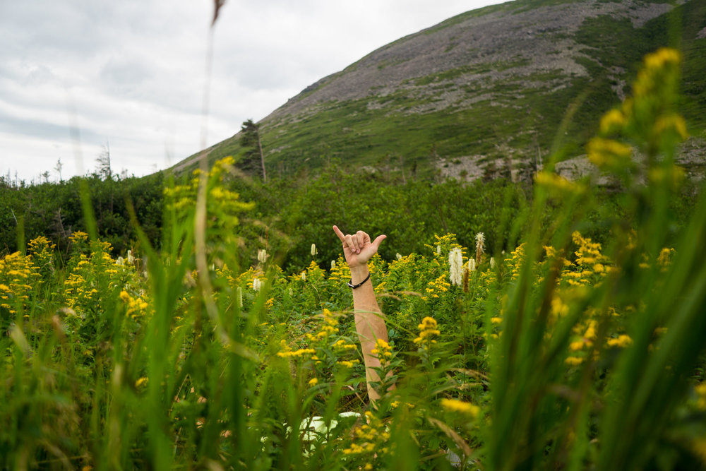 Hang Loose in the wild flowers