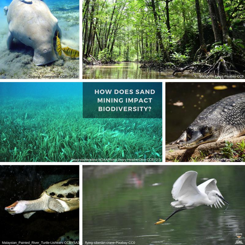 SandMining & Biodiversity.jpg