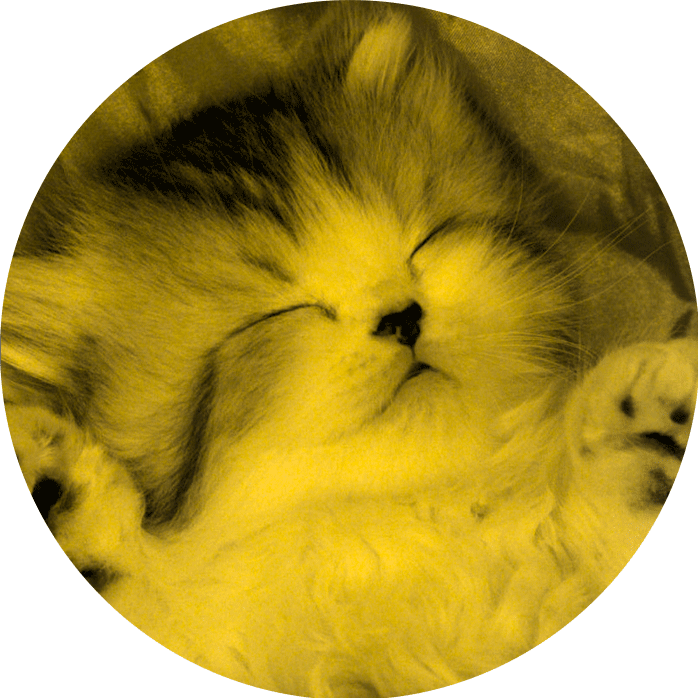 yellowsleepingcat