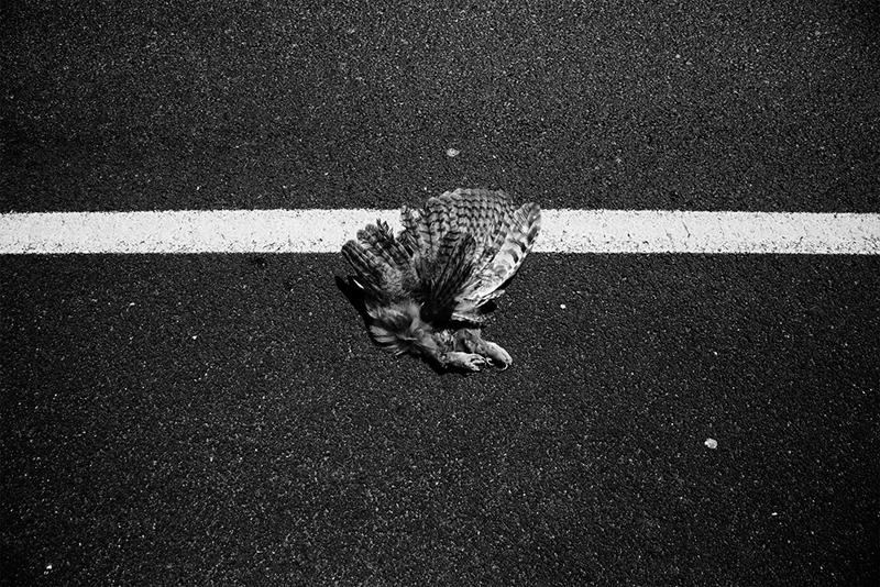 "Kegan Snyder ""Hawk"" B&W photograph 12"" x 18"""