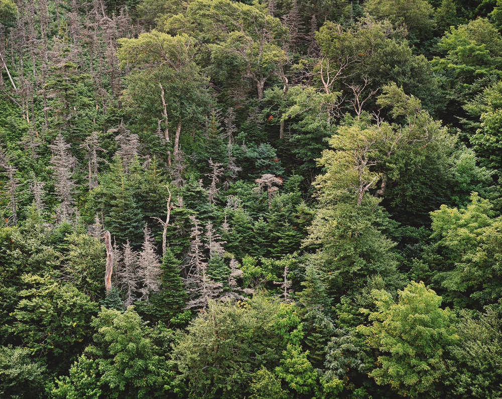 "Christopher Burkett ""Ancient Forest,"" Nova Scotia     Cibachrome Photograph     Available in 20"" x 24"", 30"" x 40"", and 40"" x 50"""