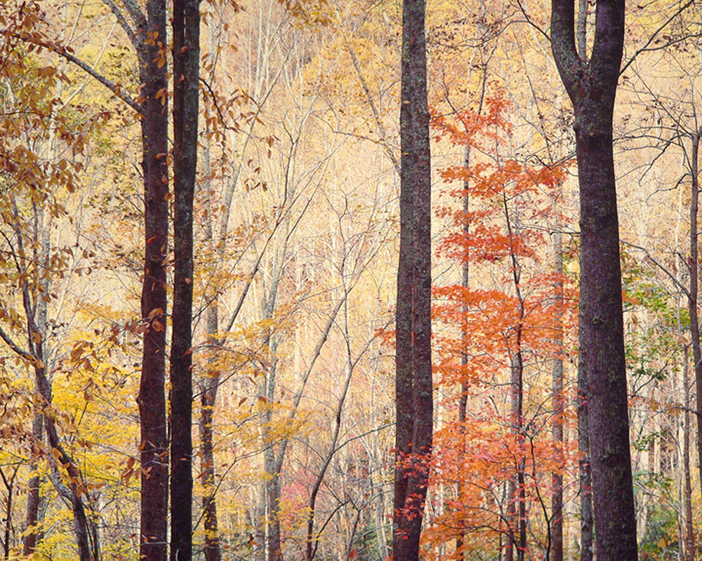 "Christopher Burkett ""Appalachian Forest Sunrise,"" Virginia     Cibachrome Photograph     Available in 20"" x 24"", 30"" x 40"", and 40"" x 50"""