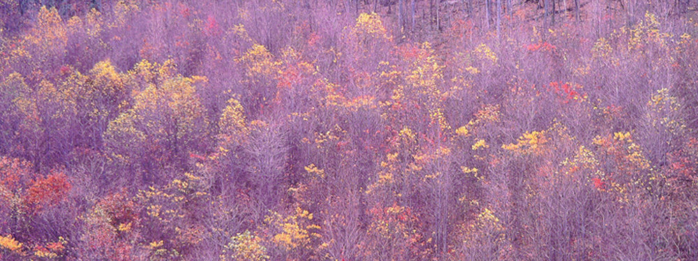 "Christopher Burkett ""Appalachian Embers,"" West Virginia     Cibachrome Photograph     Available in 13"" x 33"", 20"" x 50"", and 26"" x 64"""