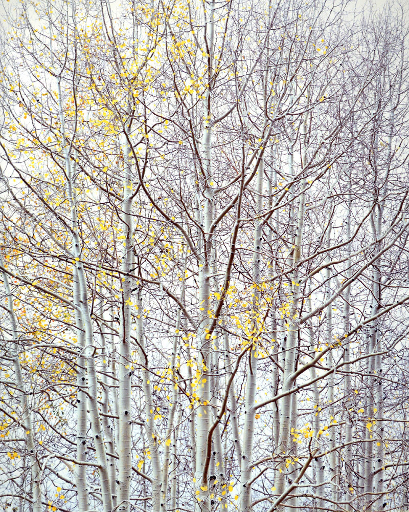 "Christopher Burkett ""Aspen Ethos,"" Colorado     Cibachrome Photograph     Available in 24"" x 20"", 40"" x 30"", and 50"" x 40"""