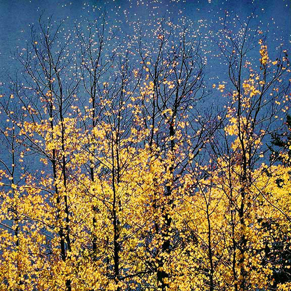 "Christopher Burkett ""Autumn Aspens & Blue Lake Stars,"" Wyoming     Cibachrome Photograph     Available in 20"" x 20"", 30"" x 30"", and 40"" x 40"""