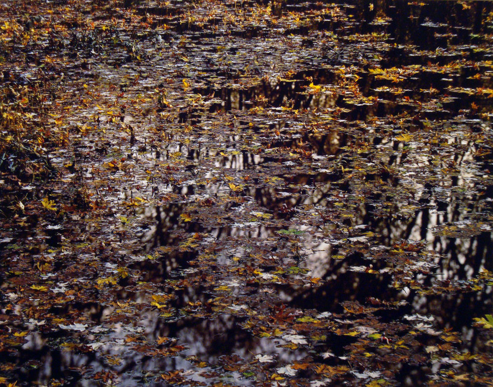 "Christopher Burkett   ""Floating Leaves on River,"" New Jersey    Cibachrome Photograph     Available in 20"" x 24"", 30"" x 40"", and 40"" x 50"""