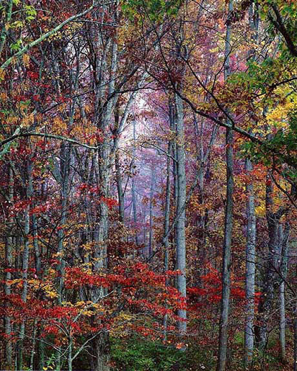 "Christopher Burkett ""Glowing Autumn Forest,"" Virginia    Cibachrome Photograph     Available in 20"" x 24"", 30"" x 40"", and 40"" x 50"""