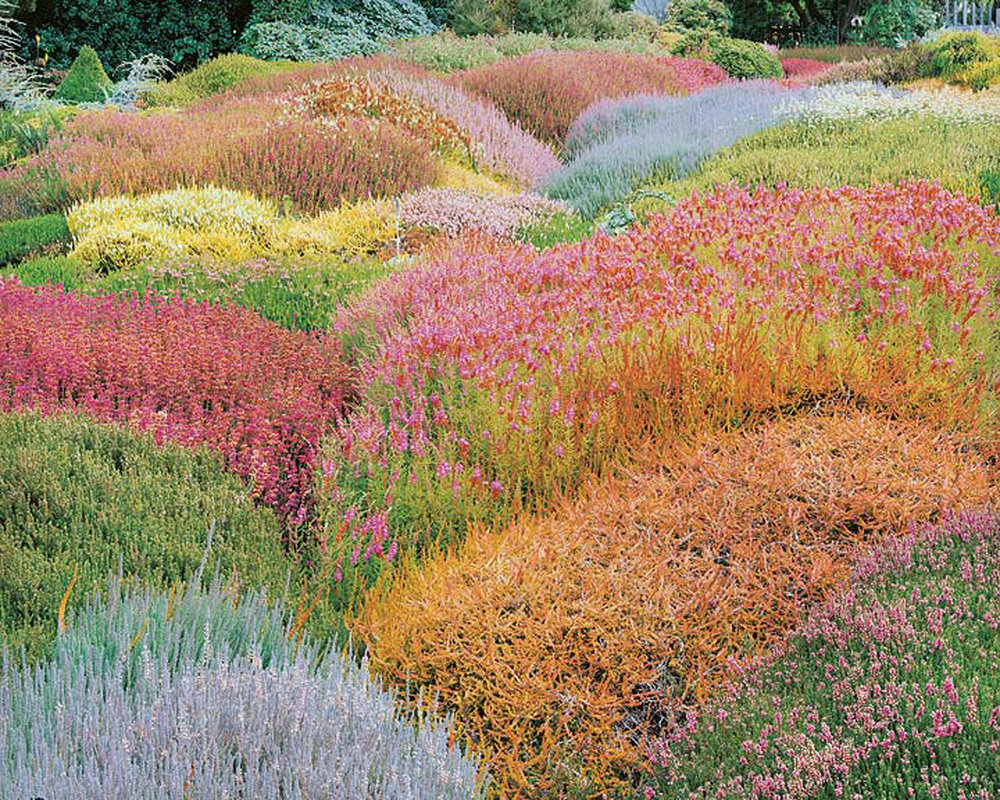 "Christopher Burkett   ""Summer Heather Garden,"" California    Cibachrome Photograph     Available in 20"" x 24"", 30"" x 40"", and 40"" x 50"""
