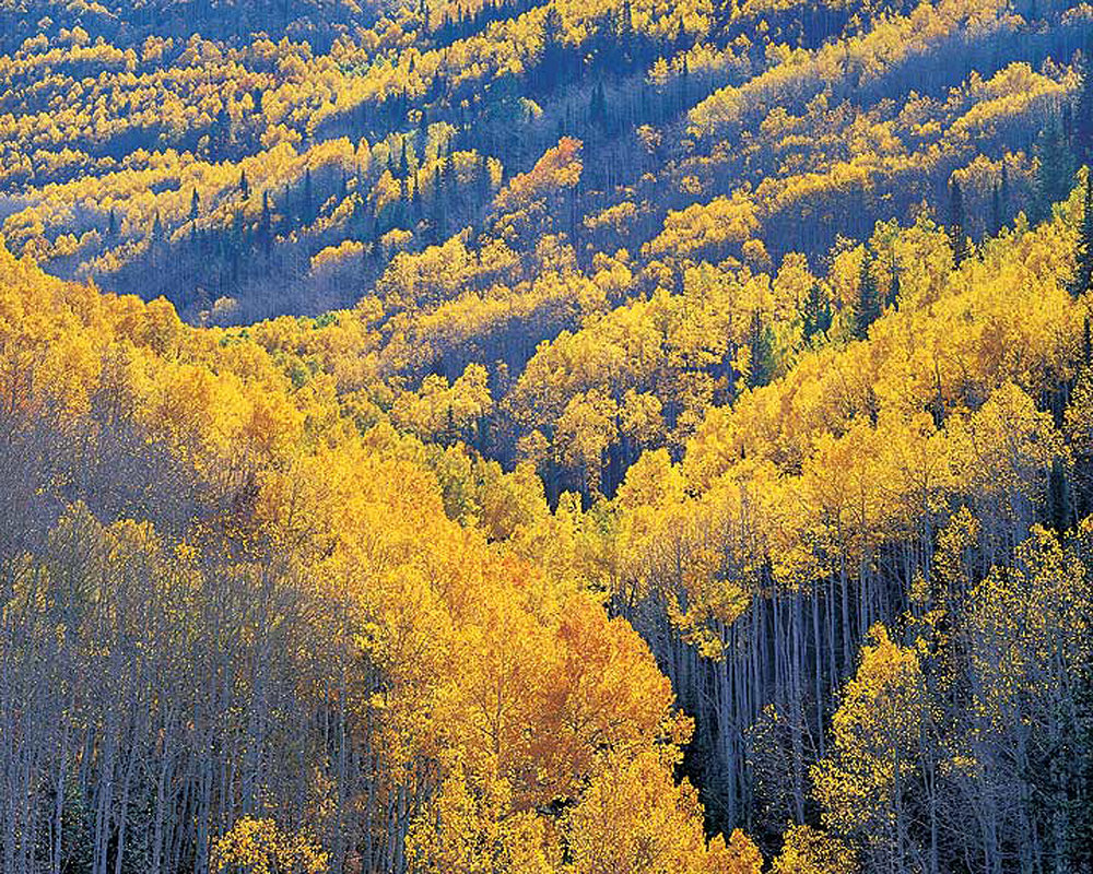 "Christopher Burkett ""Sunlit Aspen Mountain Valley,"" Utah  Cibachrome Photograph  Available in 20"" x 24"", 30"" x 40"", and 40"" x 50"""