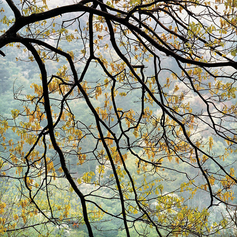 "Christopher Burkett   ""Cascading Maple and Rain,"" West Virginia    Cibachrome Photograph    Available in 20"" x 20"", 30"" x 30"", and 40"" x 40"""