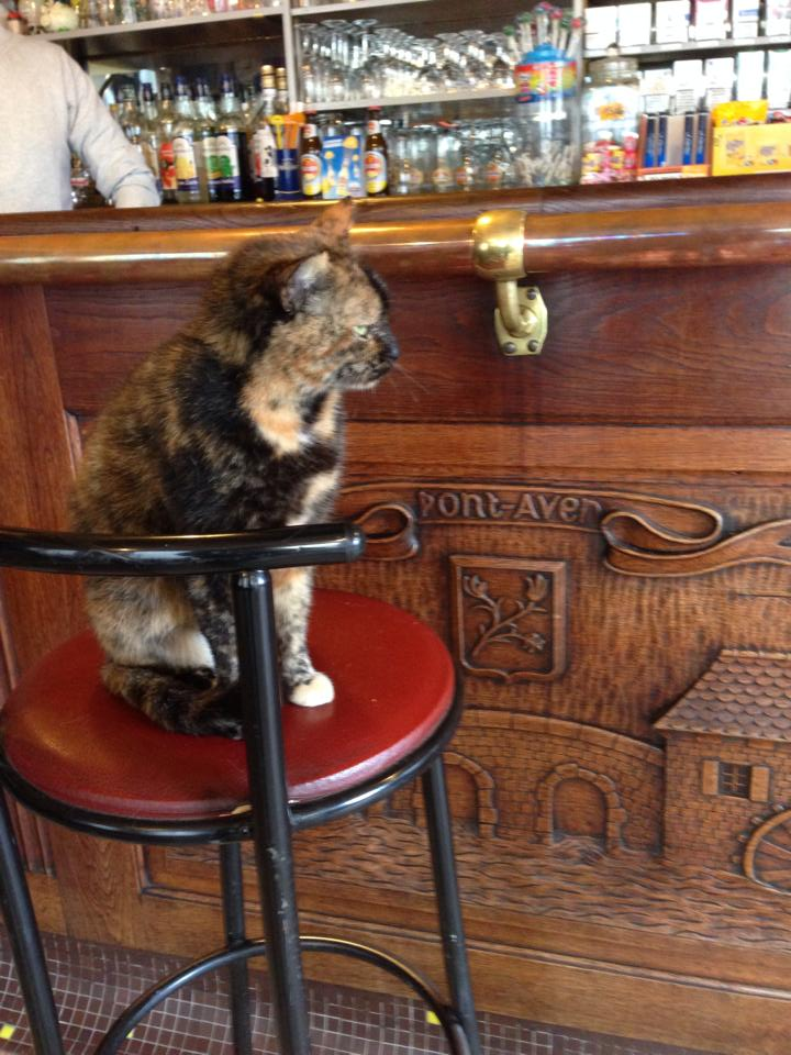 A bar and its resident cat in Pont-Aven, France