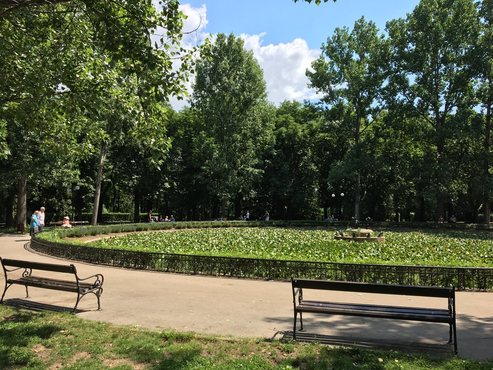 The Lily Pond in Boris' Garden