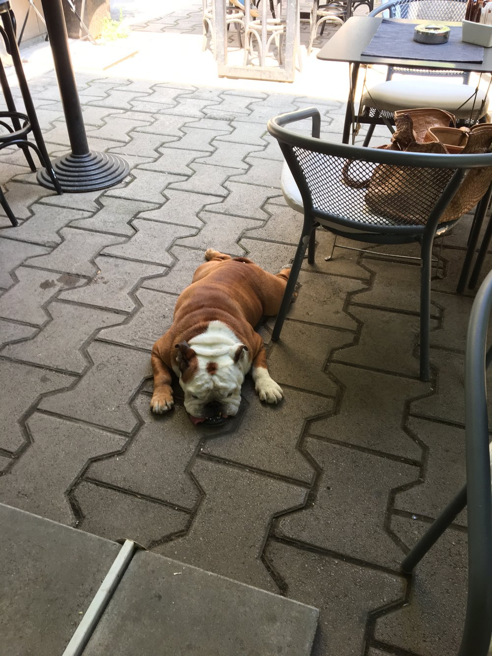 Bonus point - the people and canine watching at Lime are some of the best in Sofia!