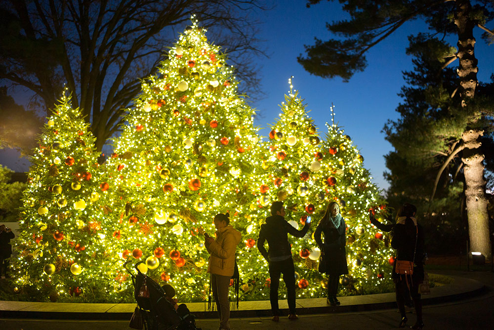 Tree Lighting  at NYBG