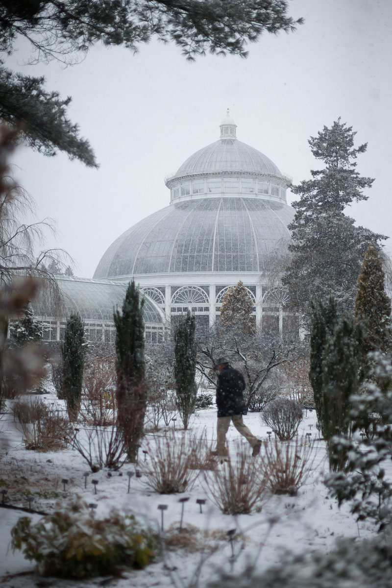 Botanical Gardens New York Bronx Ben Hider Photography nature snow