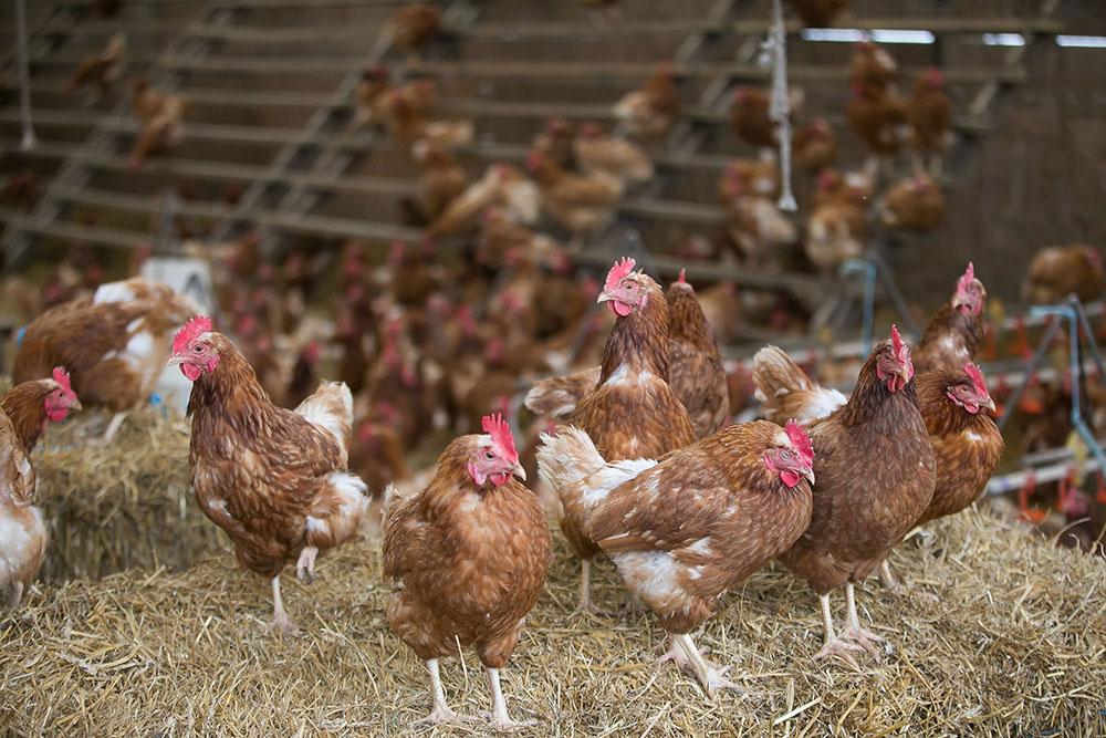 Food-Farm-Chef-Photographer-Stone-Barns-759