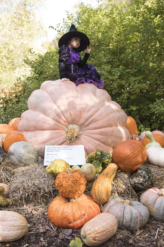 NYBG Photographer Botanical Gardens NY The Bronx Pumpkin Halloween