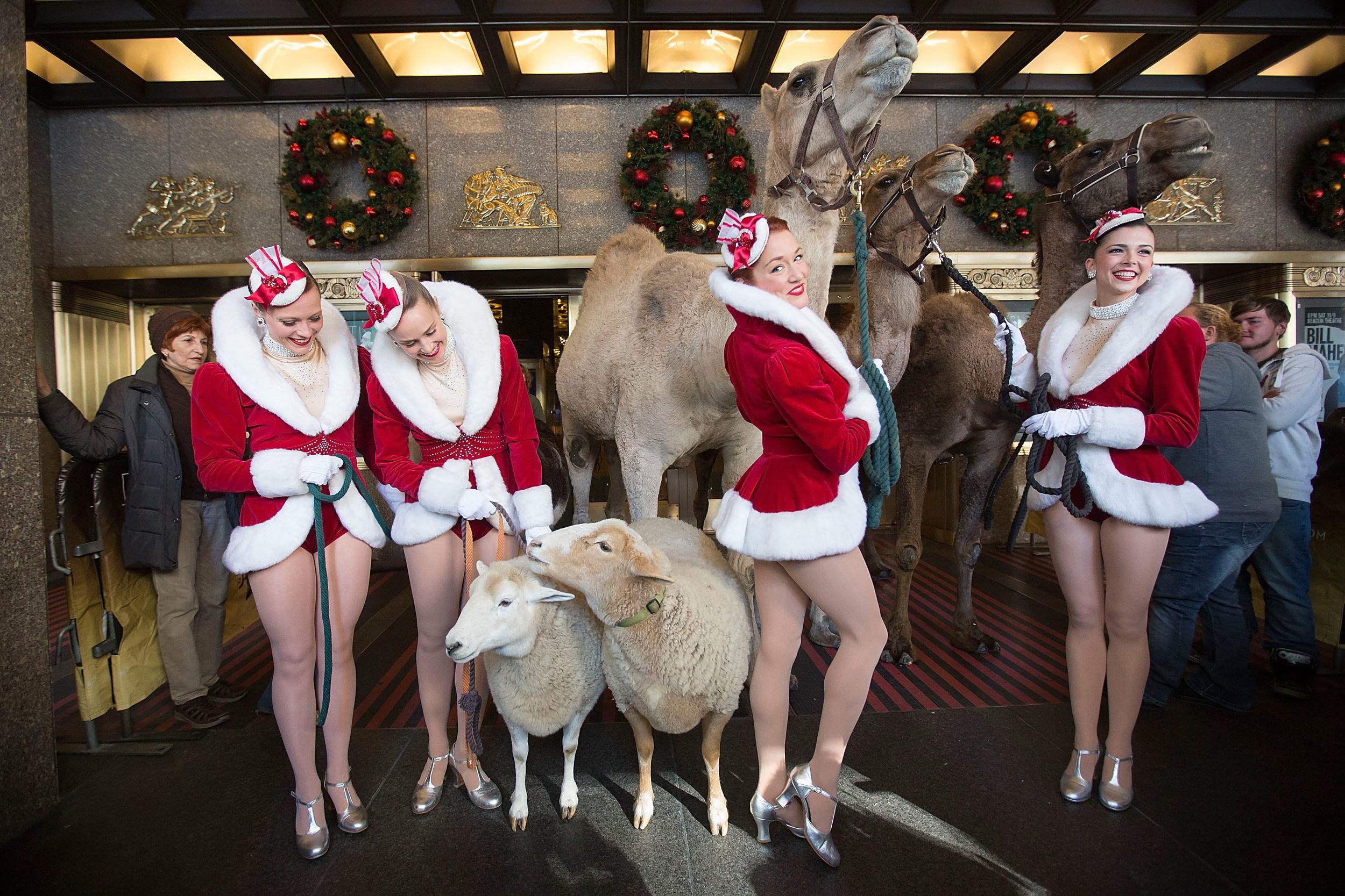 "2013 Radio City Christmas Spectacular ""Living Nativity"" Rehearsals"