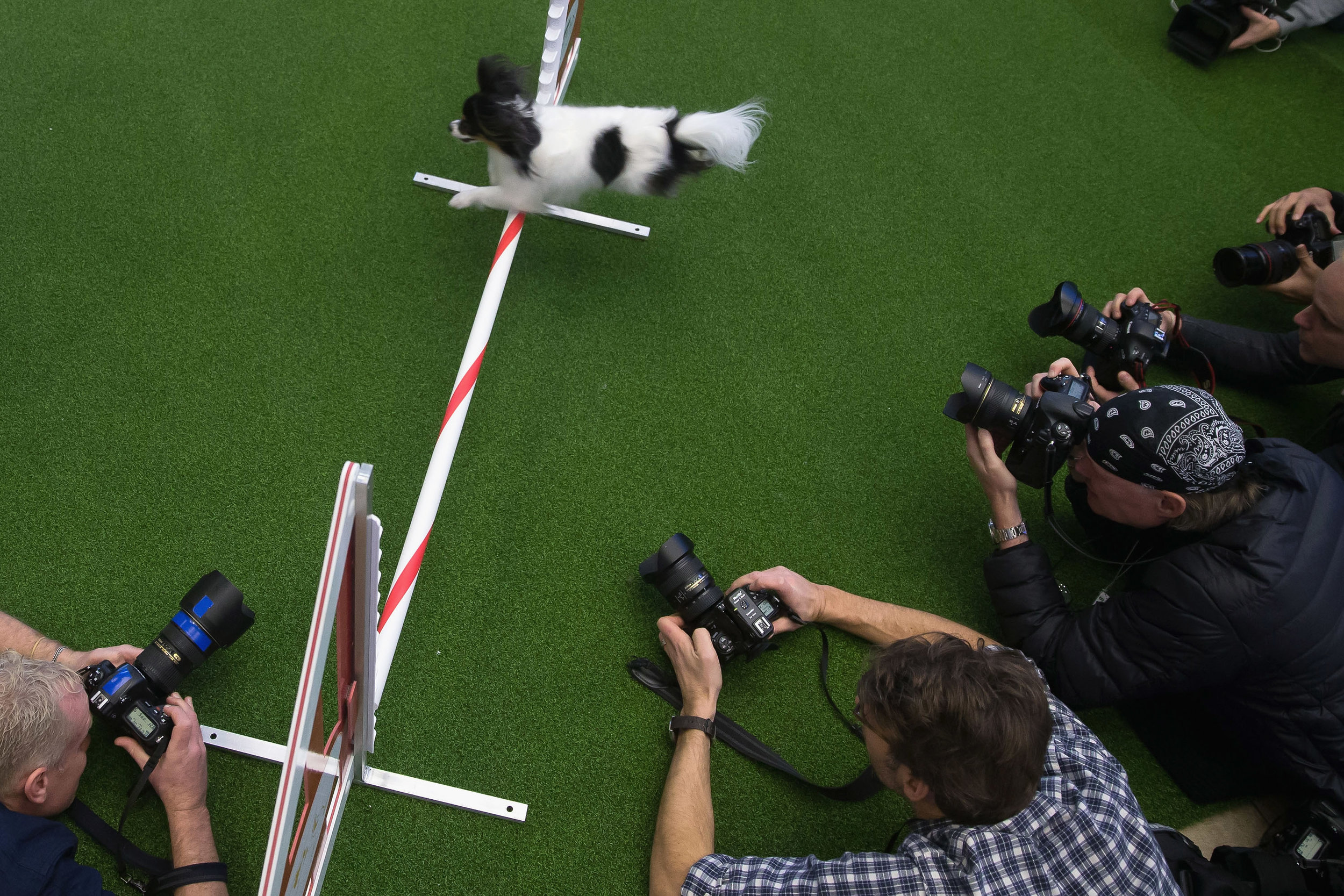The 138th Annual Westminster Kennel Club Dog Show - Press Conference