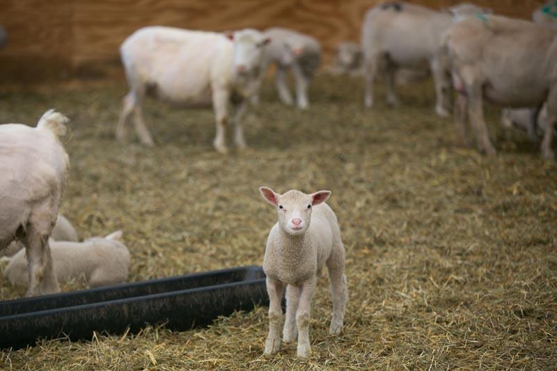 Farm-Photography-Event-851