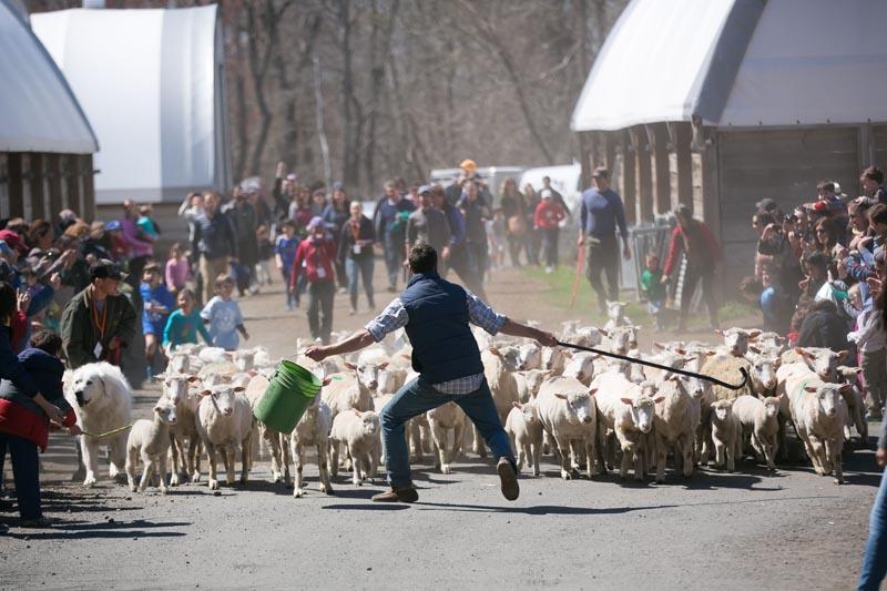 Farm-Photography-Event-852