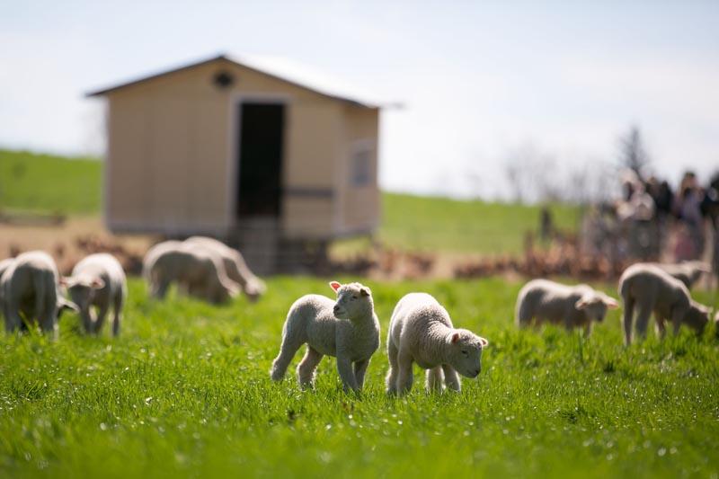 Farm-Photography-Event-853