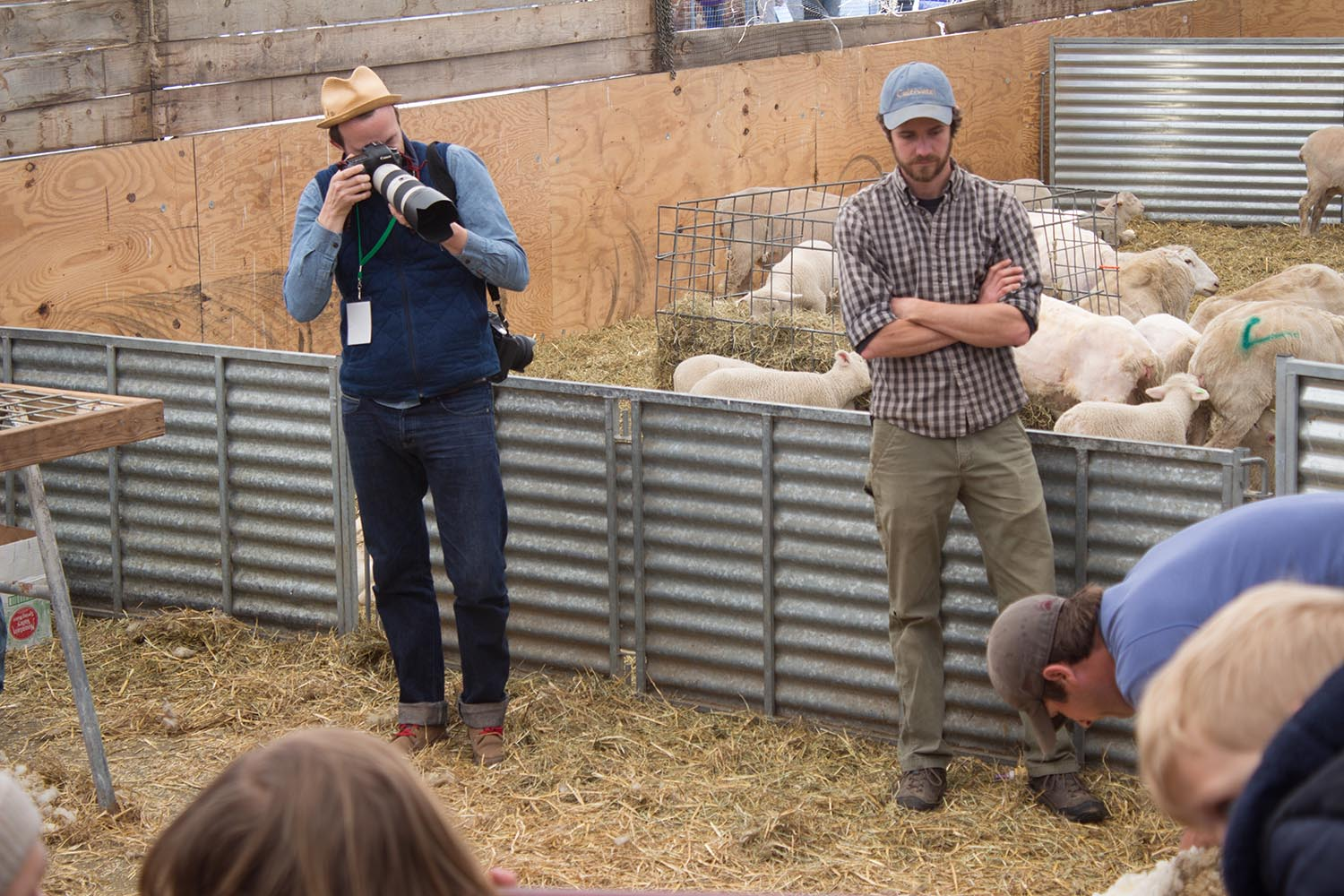 Sheep Shearing Farm life nature food agriculture Ben Hider Photographer Photography